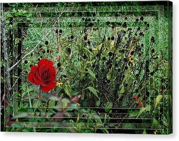 Inner Layers Canvas Print by Kelly Rader