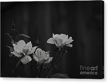Inner Strength Canvas Print by Kim Henderson