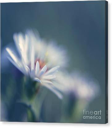 Innocence - 03 Canvas Print by Variance Collections