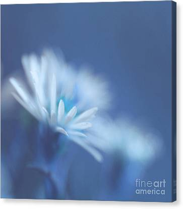 Innocence 11 Canvas Print by Variance Collections