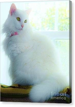 Innocence 2 Canvas Print by Judy Via-Wolff