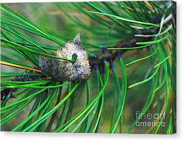 Pine Needles Canvas Print - Inpaled  by Jeff Swan