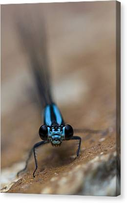 Canvas Print featuring the photograph Inquisitive by Rob Hemphill