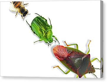 Insects Canvas Print by Gombert, Sigrid