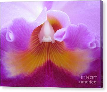 Inside An Orchid's Heart Canvas Print by Judee Stalmack