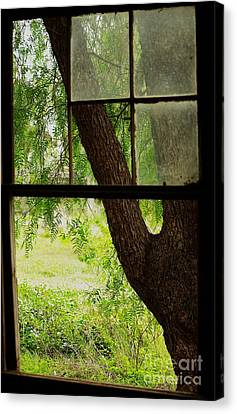 Canvas Print featuring the photograph Inside Looking Out by Blair Stuart