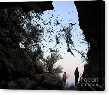 Inside The Bat Cave Canvas Print by Mark Robbins
