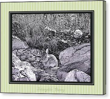 Intangible Bunny Canvas Print by Susan Kinney