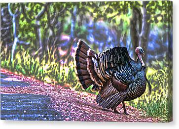Intense Tom Turkey Display Canvas Print by Gregory Scott