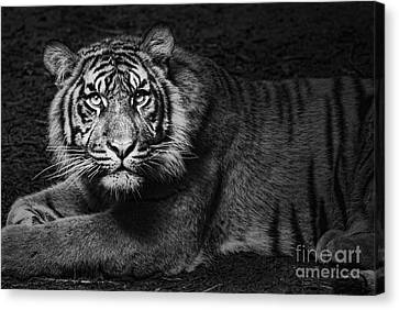 Intent Canvas Print by Andrew Paranavitana