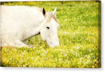 Kentucky Horse Park Canvas Print - Intermission by Darren Fisher