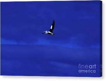 Canvas Print featuring the photograph Into The Blue by Blair Stuart