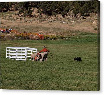 Working Dog Canvas Print - Into The Paddock by Joshua House