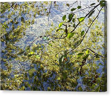 Into The River Canvas Print