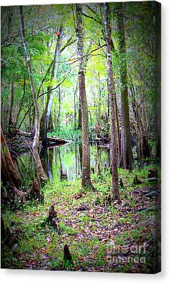 Into The Swamp Canvas Print by Carol Groenen