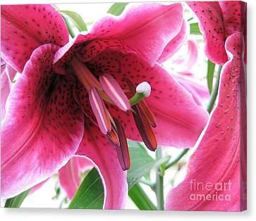 Intoxicating Aroma Lillie Canvas Print by Judy Via-Wolff