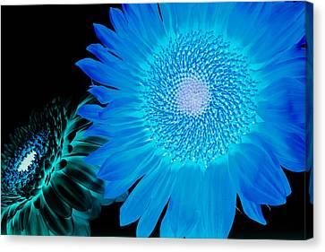 Canvas Print - Inverted Flowers by Alhaji Samura