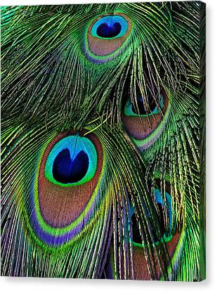 Iridescent Eyes Canvas Print