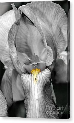 Iris - Bw Canvas Print by Larry Carr