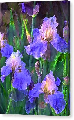 Iris 51 Canvas Print by Pamela Cooper