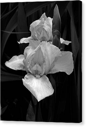 Canvas Print featuring the photograph Iris by David Pantuso