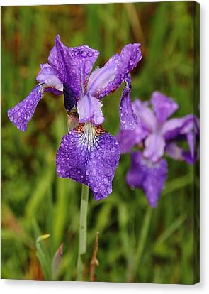 Canvas Print featuring the photograph Iris Dew by Coby Cooper