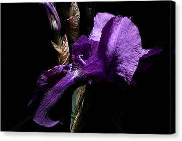 Her Majesty - Gladiola Canvas Print by Gilbert Artiaga