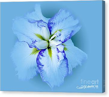 Iris In Blue Canvas Print