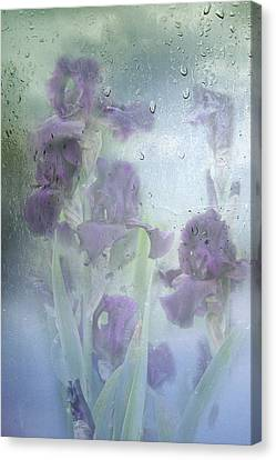 Iris In The Spring Rain Canvas Print by Diane Schuster