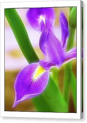 Iris On Pointe Canvas Print by Judi Bagwell