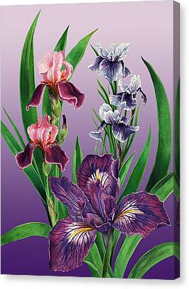 Iris On Purple Canvas Print