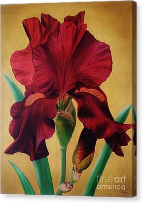 Iris Canvas Print by Paula Ludovino