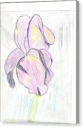 Iris Sketch Canvas Print by Carolyn Donnell