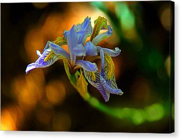 Canvas Print featuring the photograph Iris by Tam Ryan