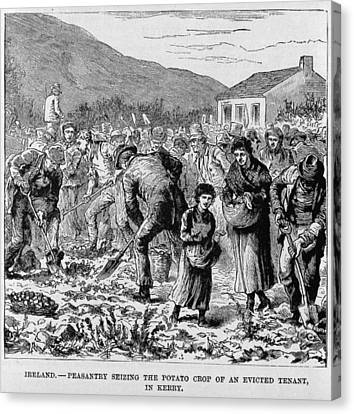 Irish Peasants Seizing The Potato Crop Canvas Print