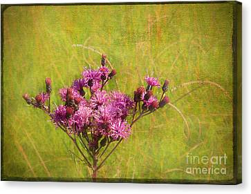 Ironweed In Autumn Canvas Print by Judi Bagwell
