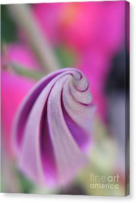 Canvas Print featuring the photograph Irresistable Photography by Tina Marie