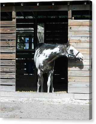 Is It Safe To Come Out Canvas Print by Judy Hall-Folde