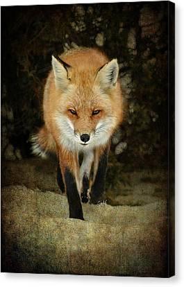 Island Beach Fox Canvas Print by Sami Martin