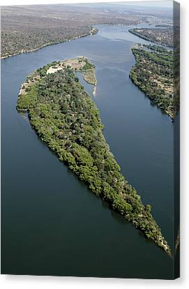 Island On The Zambezi River Canvas Print by Tony Camacho