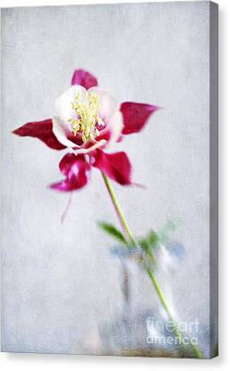 Isn't She Lovely Canvas Print by Darren Fisher
