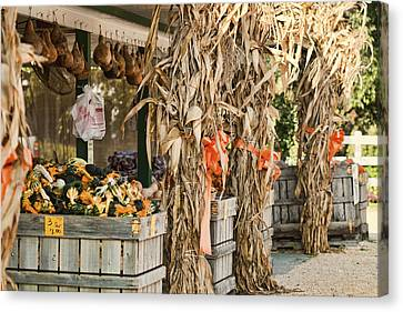 Isoms Orchard In Fall Regalia Canvas Print by Kathy Clark