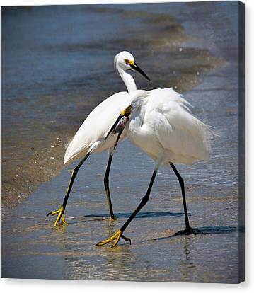 It Takes Two To Tango Canvas Print by Vicki Jauron