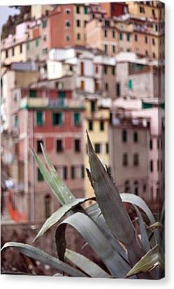 Italian Aloe Canvas Print by Mike Reid