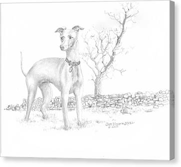 Canvas Print featuring the drawing Italian Greyhound by Jim Hubbard