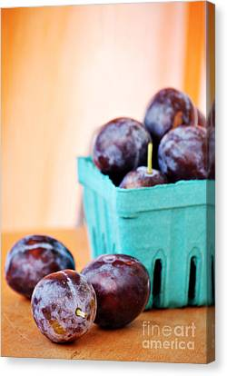 Italian Plums Canvas Print by HD Connelly