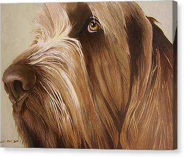 Italian Spinone Canvas Print