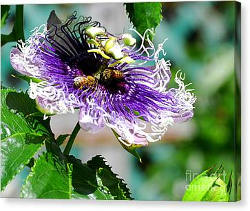 Canvas Print featuring the photograph It's A Passion by Linda Mesibov