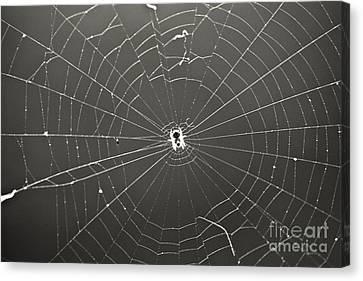 Itsy Bitsy Spider Canvas Print by Leslie Leda