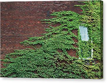 Canvas Print featuring the photograph Ivy Covered Window by Gary Slawsky